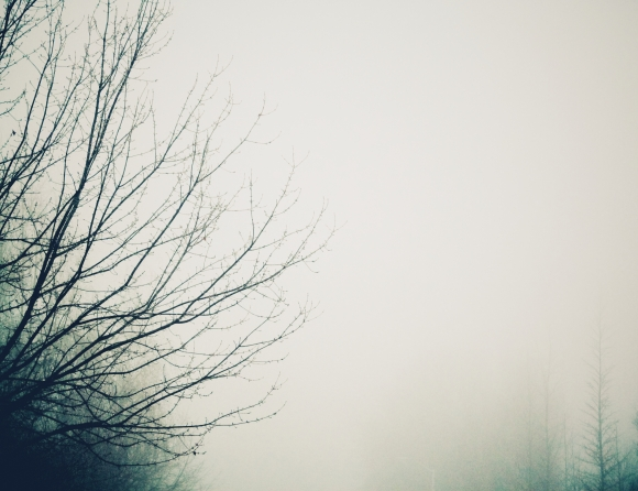 Ryan Bradley_Fog Noir Tree 1