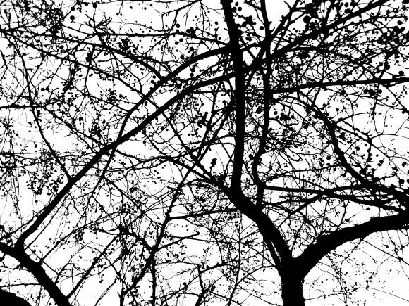 Trees Untitled
